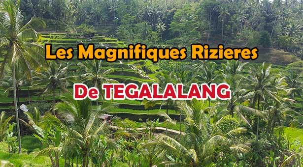 Les-magnifiques-rizières-de-Tegalalang-près-d'Ubud-UNE