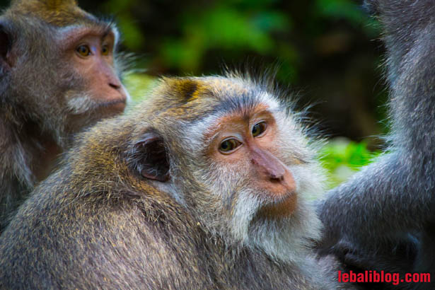 Monkey Forest-1