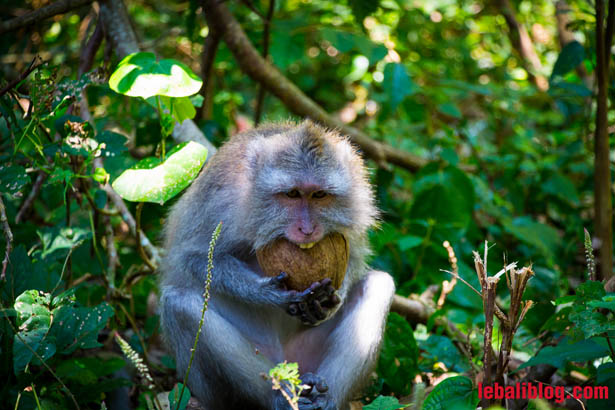 Monkey Forest-3