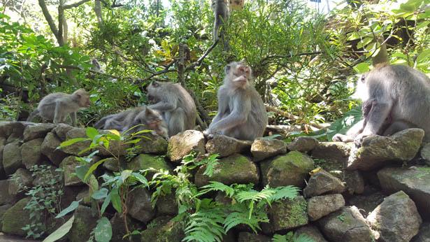 Visite de la Foret des Singes - Monkey Forest a Ubud (20)
