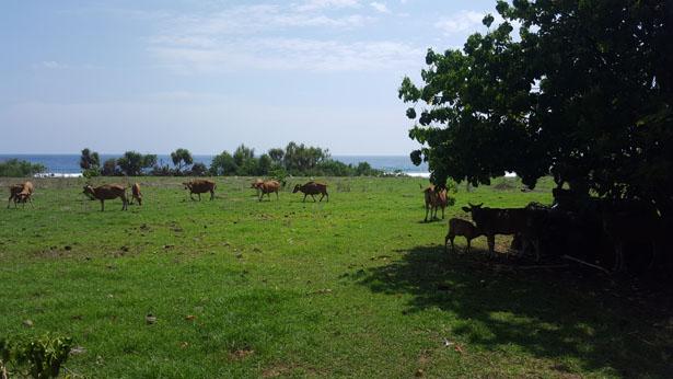 la plage cachée de Nyang Nyang a Pecatu Ulu Watu Plus belles plages Bali (1)