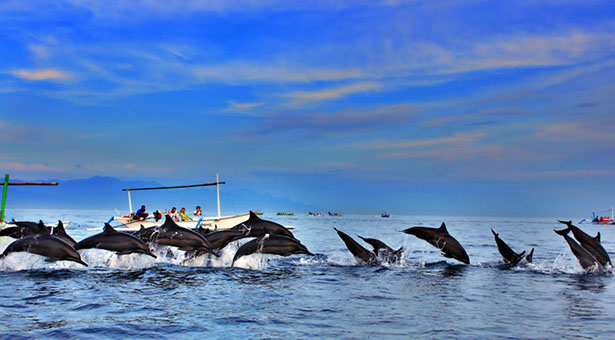 Dophins Lovina Bali Blog Bali