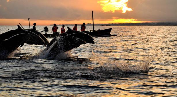 Dophins Lovina Bali Blog