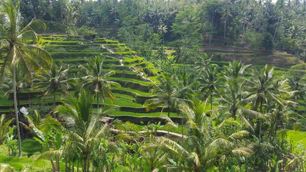 Rizieres Tegalalang Ubud Blog Bali (1)