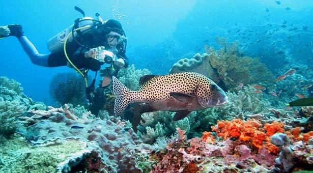 Snorkeling-Plongee-Bali-Nusa-Lembongan-Raie-Manta-Mola-Mola-Poisson-Lune-Blog-Bali