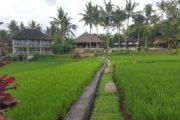 Mathis Retreat Ubud : Votre hôtel de charme à Ubud