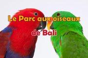 Découvrez le Parc aux oiseaux de Bali (Bali Bird Park)