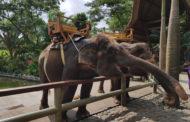 20% de réduction pour visiter le zoo de Bali