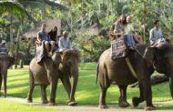 Les balades à dos d'éléphant à Bali
