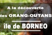 A la découverte des Orang-Outans de Tanjung Puting à Bornéo